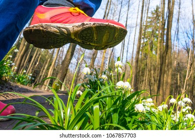 Spring snowflake flowers Leucojum vernum blooming in sunset. Flower protected by law. Shoe treading on a flower in grass. Concept shoes ruthlessly tramples the living flower. Keep off the flowers