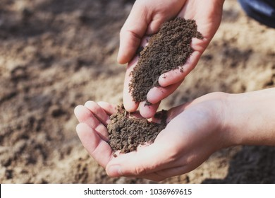 Spring sowing campaign. Men's hands with soil. Agrarian with soil in his hands, quality control concept, agrarian business, food cultivation