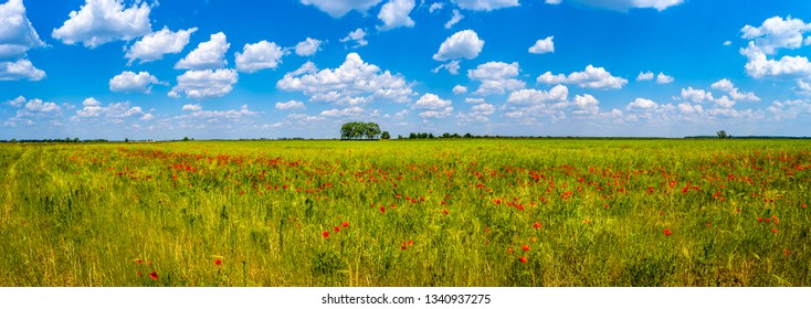 Spring spirit at red field of poppies and beautiful nature in panorama under blue sky