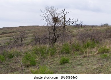 Spring steppe landscape, the first green grass on the slope of the ravine, trees and bushes without leaves.