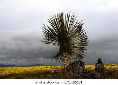 Spring storm with dramatic clouds in Arizona