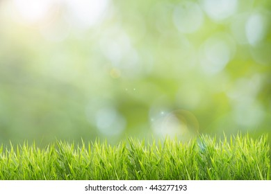 Spring or summer and abstract nature background with grass field