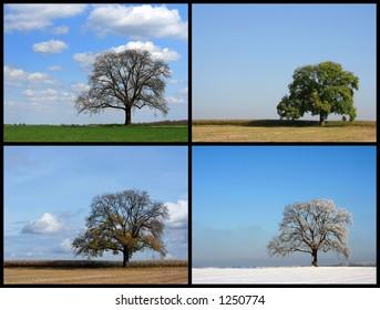Spring, Summer, Autumn, Winter