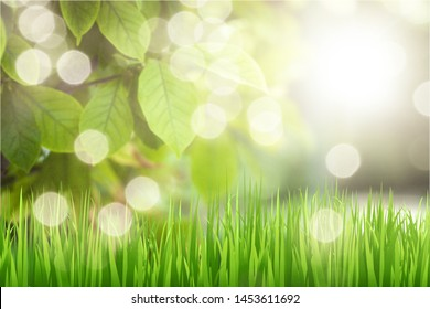 Spring summer background with a frame of grass and leaves on nature. Juicy lush green grass on meadow with drops of water dew sparkle in morning light outdoors close-up, copy space, wide format