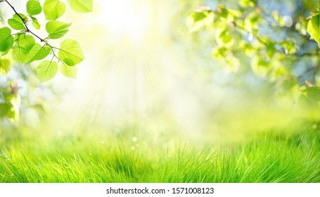 Spring summer background with frame of grass and leaves on nature. Juicy lush green grass on meadow in morning sunny light outdoors, copy space, soft focus, defocus background.