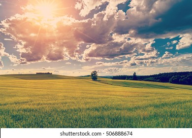 Spring summer background - grass field meadow scenery landscape Instagram wash-out effect
