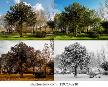 Spring, Summer, Fall and Winter. Four seasons photographed in the same park, from the exact same location, in Blaina, South Wales UK.