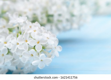 Spring or summer floral background for greeting card. White lilac on a blue wooden background close-up. Template for design with copy space.