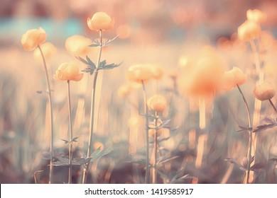 spring or summer flowers background / vintage toning nature landscape flowers