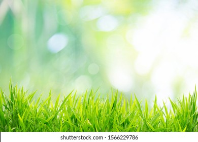 Spring or summer and grass field with sunny background