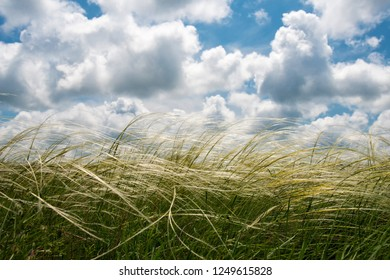 Spring or summer landscape, blue sky with clouds and green grass shaken by the wind - space for text