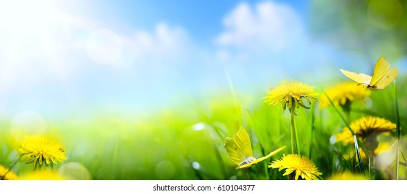 spring or summer landscape;  yellow flower and  butterfly on blue sky background