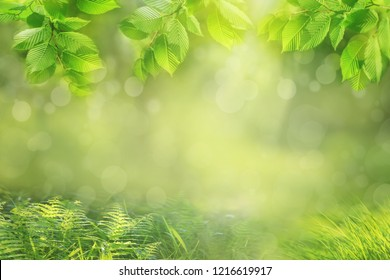 Spring or summer nature background, frame of green tree leaves