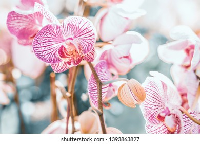 spring and summer season with tropical flowers concept from purple orchid bloom with beauty bright sky background
