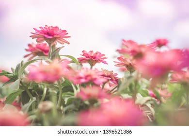 spring and summer season with tropical flowers concept from group of small purple flower bloom with beauty sky background