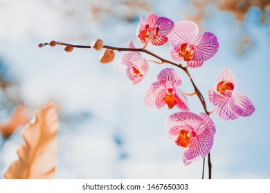 spring and summer season with tropical flowers concept from purple orchid bloom with beauty bright sky background and copy space