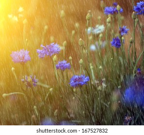 Spring / summer shower and beautiful wild flowers