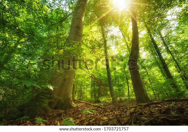 The spring sun is shining in the green mountain forest in the national Park