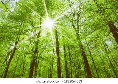 spring sun shining through the tree branches