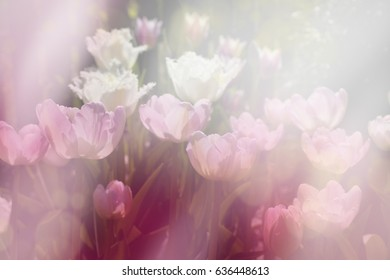 spring sunny day floral background