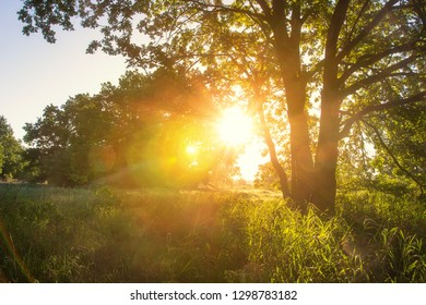 Spring sunrise. Sun shines on grassy meadow with tree. Springtime landscape in sunny morning