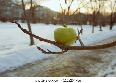 spring sunset and a green apple on the branches of a tree, snow and snowstorm under snow