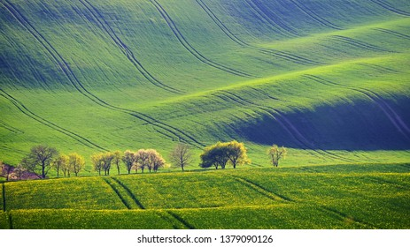 Spring sunset landscape.  Hilly field and rape meadows in Moravian Tuscany Czech Republic.