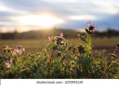 Spring sunset on Oklahoma