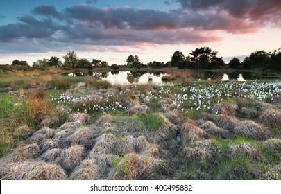 spring sunset on swamp, Kampina, Netherlands