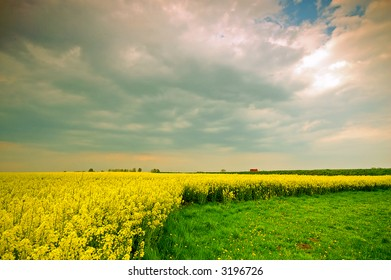 Spring sunset scenery. Rapeseed field