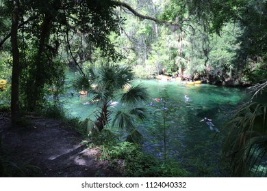 Spring Swimming Hole