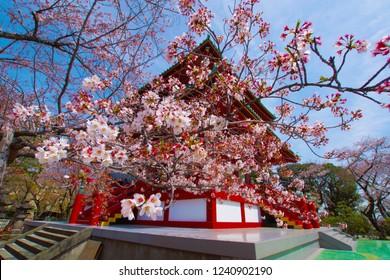 Spring Takamichi mountain (Yokohama City, Kanagawa Prefecture)