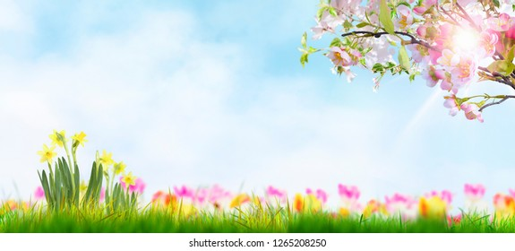 spring template green meadow with spring flowers