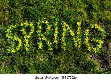 """""""SPRING"""" text on grass, written with winter aconite (Eranthis hyemalis) flowers"""