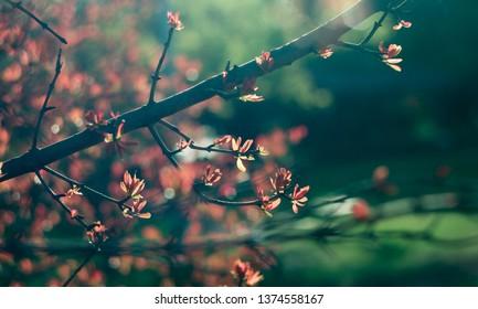 Spring time. Blossom plants closeup
