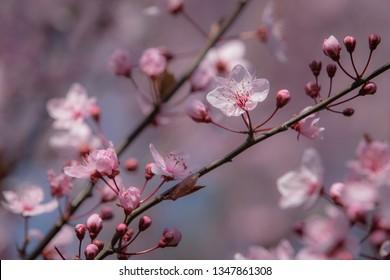 Spring time blossom soft