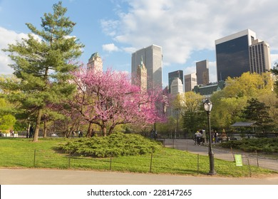 Spring time in Central Park and Manhattan Skyline, New York City