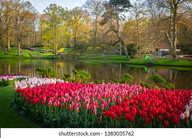 spring time colorful tulip flowers of the Netherlands, Holland