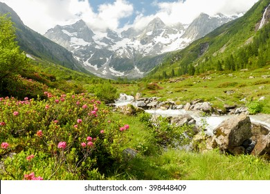 Spring time in the high mountains with rhododendrons on mountain river