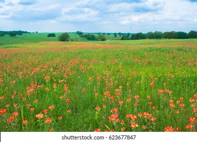 Spring time with Indian Paintbrush wildflowers in Norman, Oklaho