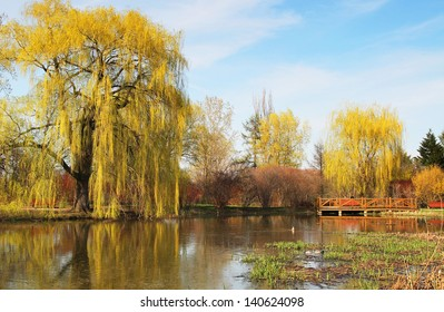 Spring time with a pound with reflection of weeping willow