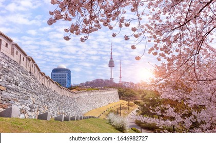 Spring Time, Seoul tower and cherry blossom in Spring of Seoul South Korea