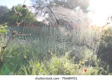 Spring time, Spider Web, soft lights
