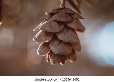Spring Time Thaw - Hemlock Tiny Cone