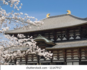 Spring time view Todai-ji temple with cherry blossoms (sakura) in the foreground in Nara, Japan.