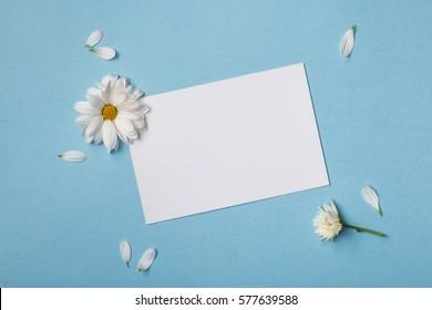 Spring top view composition:  blank stationary template / invitation mockup, white flowers with yellow heart,  scattered petals around. Sky blue background with copy space for text. Flat lay.