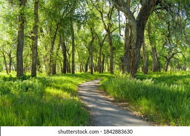 Spring Trail - A hiking trail winding through a dense grove in Chatfield State Park on a sunny Spring evening. Denver-Littleton, Colorado, USA.