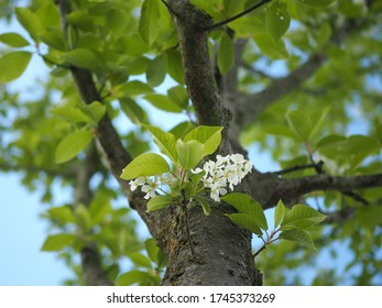 Spring tree branch with flowers on sunny day