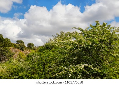 Spring tree with flowers against beautiful landscape