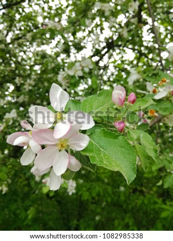 Spring Tree Flowers Blossoms Natural Background Stock Photo Edit